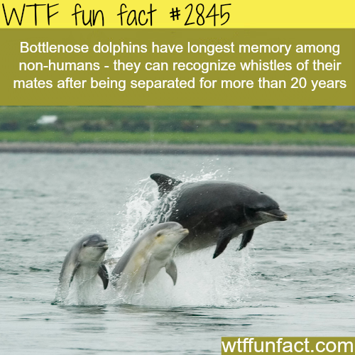 Animals with the longest memory -  WTF fun facts