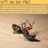ants wtf fun fact