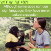 apes using sign language