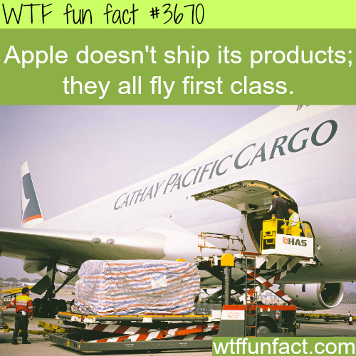 Apple flies it's products first class -  WTF fun facts