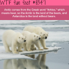 arctic bears wtf fun facts