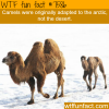 arctic camel wtf fun facts