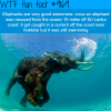 are elephants good swimmers wtf fun facts