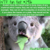are koalas smart animals