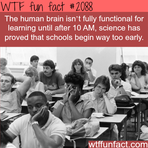 Are morning classes good for you? - WTF fun facts