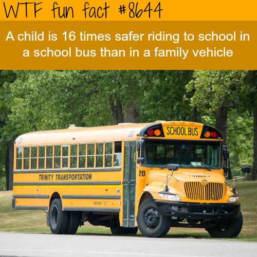 Are school buses safer than a family vehicle - WTF fun facts