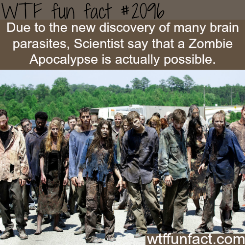 Are Zombie Apocalypse possible - WTF fun facts