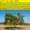argania tree in morocco wtf fun facts
