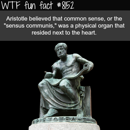 Aristotle - WTF fun fact