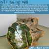 art by alison moritsugu wtf fun fact