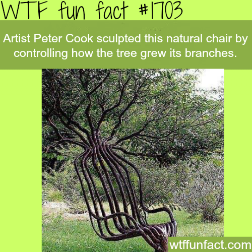 Artist Peter Cook sculpted a natural chair -WTF fun facts