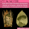 artists binh danhs work wtf fun fact