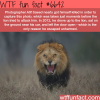 atif saeed photography wtf fun facts