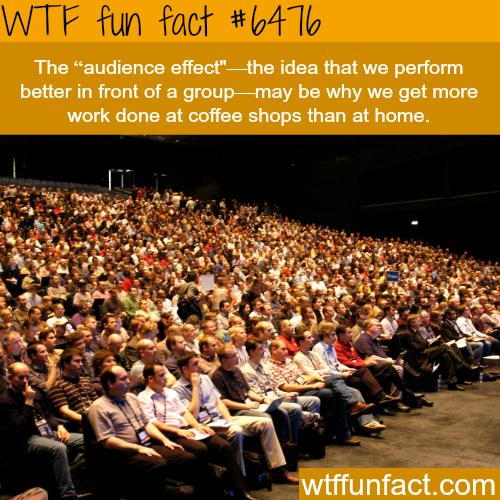 Audience effect - WTF fun facts