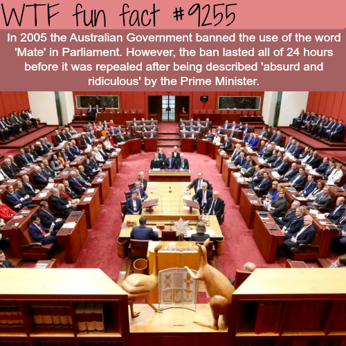 "Australia banned the word ""mate"" in Parliament - WTF fun facts"