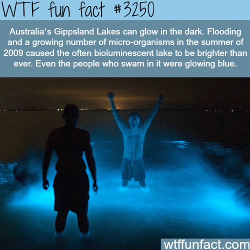 Australia's Gippsland lake glows in the dark -  WTF fun facts