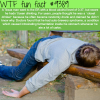 auto brewery syndrome wtf fun facts