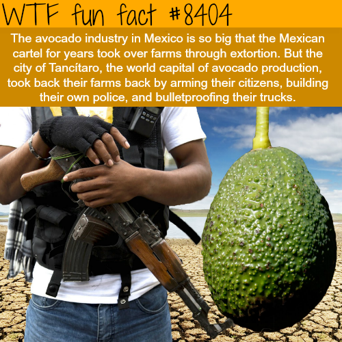 Avocado cartels - WTF fun facts