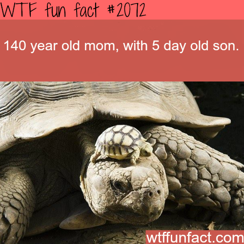 Awesome animals photography -WTF fun facts