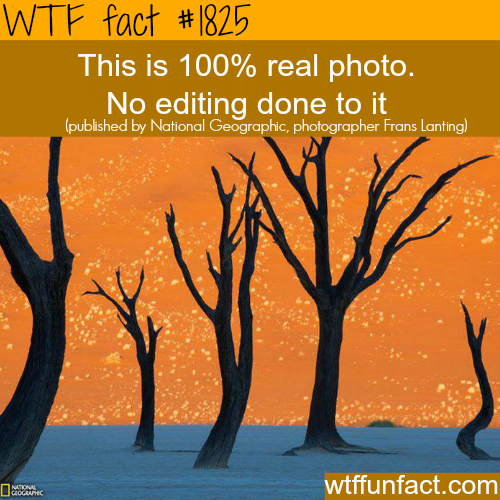Awesome photography shot!  - WTF fun facts