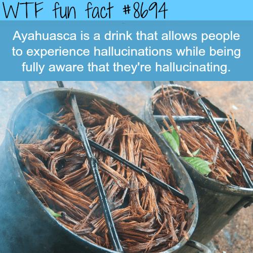 Ayahuasca - WTF fun facts