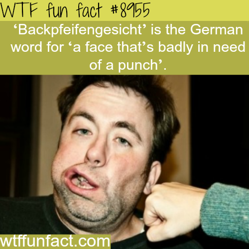Backpfeifengesicht - WTF fun facts