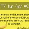 banana dna