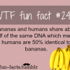 banana dna facts more of wtf fun facts are coming