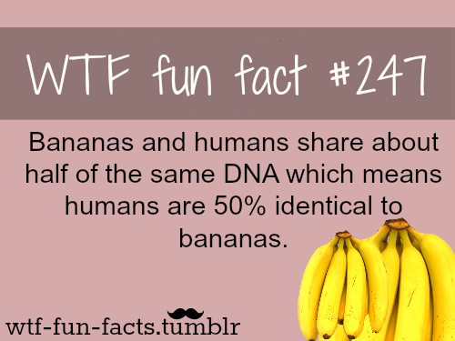 banana dna facts