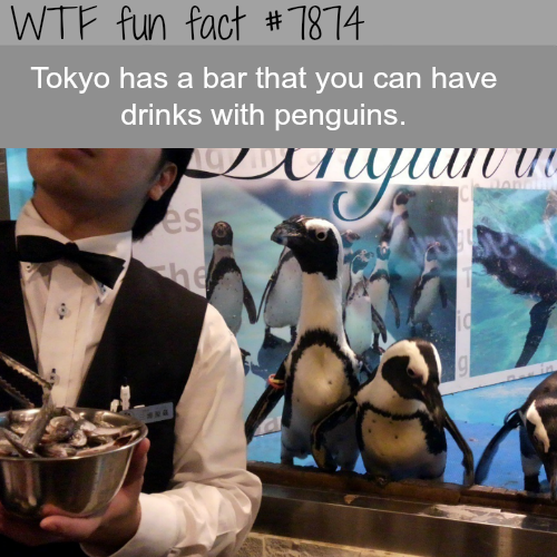 Bar in Tokyo where you can drink with penguins - WTF fun facts