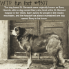 barry hounds wtf fun fact