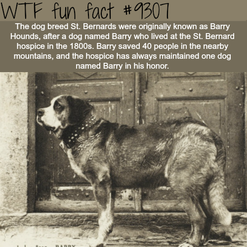 Barry Hounds - WTF Fun Fact