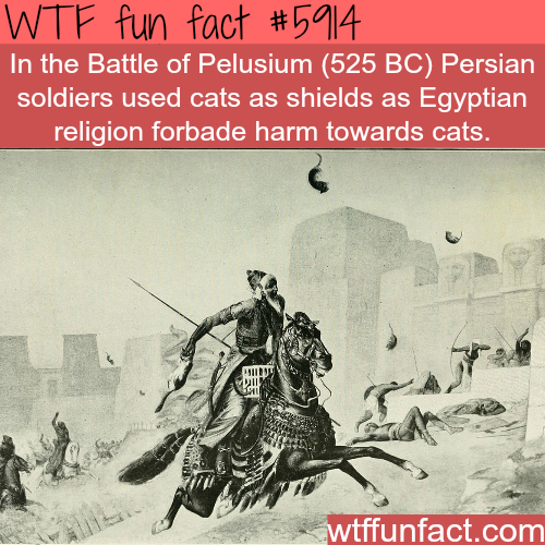 Battle of Pelusium - WTF fun facts