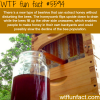 beehive that extract honey without disturbing the