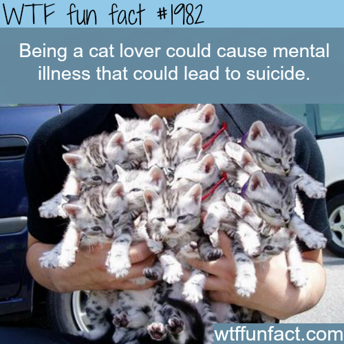 Being a cat lover could cause illness? - WTF fun facts