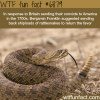 benjamin franklin suggested sending rattlesnakes