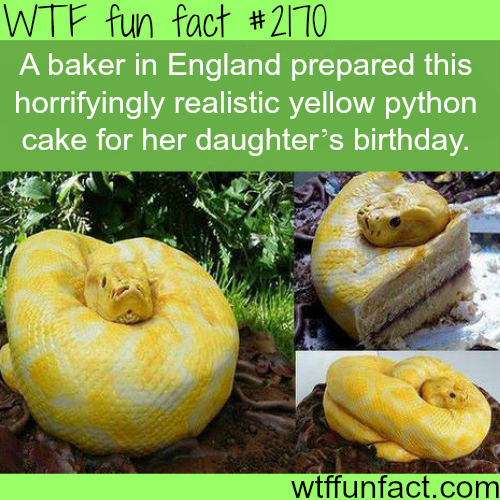 Best cake design ideas - WTF fun facts
