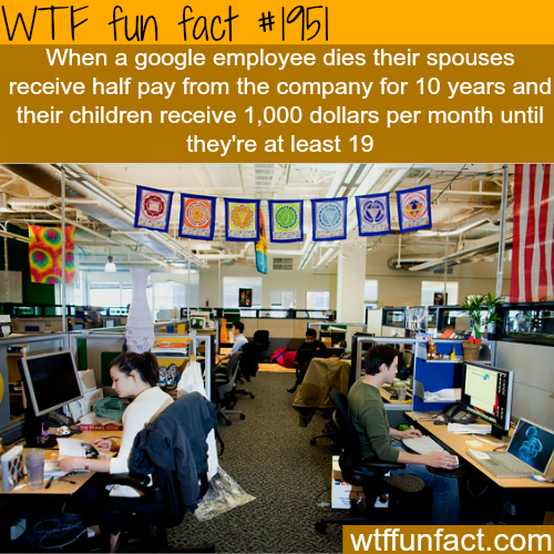 Best companies to work for - WTF fun facts