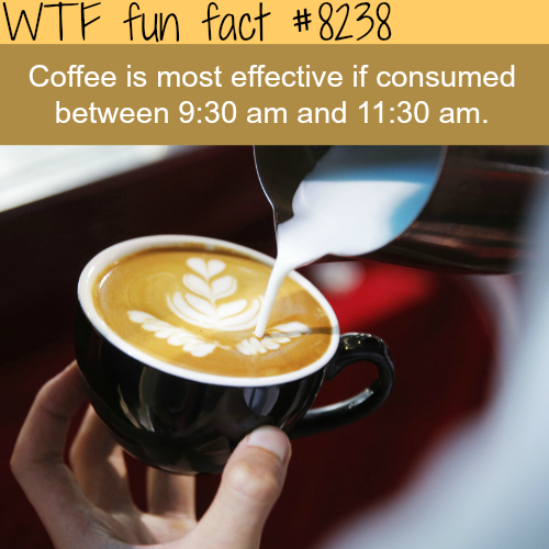 Best time to drink coffee - WTF fun facts