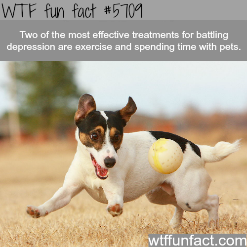 Best ways to battle depression - WTF fun fact