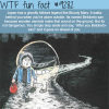 betobeto san wtf fun facts