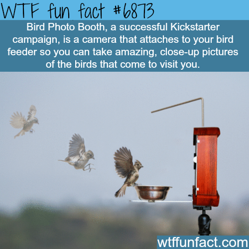 Bird Photo Booth - WTF fun fact