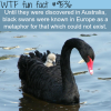 black swan wtf fun fact