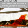 blood falls wtf fun facts
