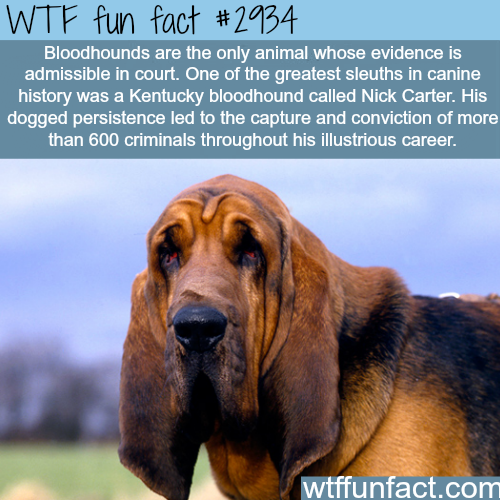 Bloodhounds is the only dog that.. -  WTF fun facts