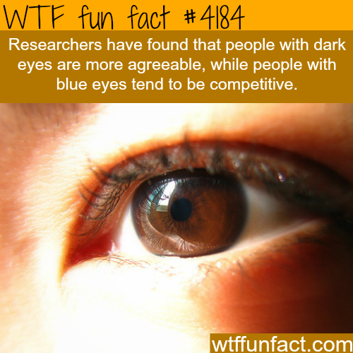 Blue eyes vs dark eyes -  WTF fun facts