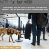 bomb sniffing dogs wtf fun fact