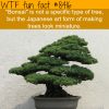 bonsai tree wtf fun facts