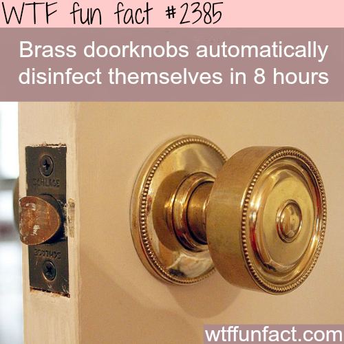 Brass doorknobs disinfect themselves - WTF fun facts