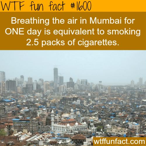 Breathing the air of Mumbai -WTF fun facts